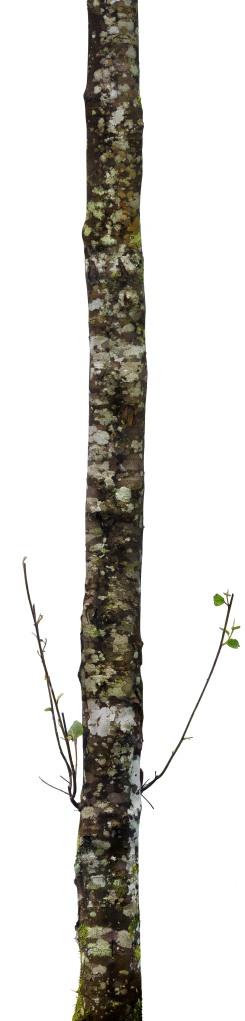 Tree 8 250cmX60cm